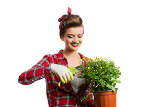 Woman in red checked shirt with pin-up make-up and hairstyle holding flower pot with yellow daisies and shears. Studio shot on white background