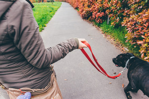 Woman qalking outdoor in a city park with her dog on a leash