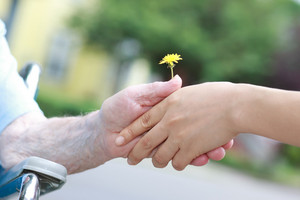 Young and seniors hands holding a yellow dandelion
