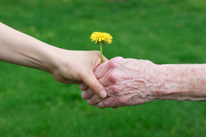 Young and senior's hands holding a yellow dandelion