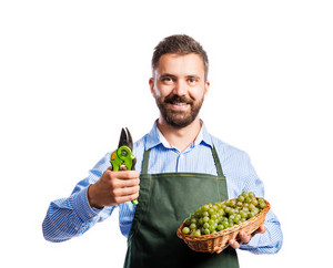 Young handsome gardener holding a basket full of grapes. Studio shot on white background