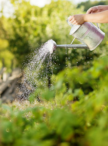 Young male gardener is watering plants in garden