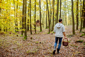 Young man with basket picking mushrooms in autumn forest, rear view