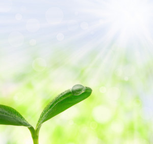 Young plant with a droplet over shiny spring background