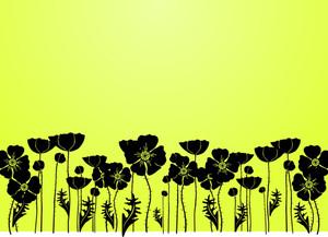 Grass And Poppy