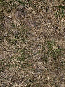 Grass And Wheat 18 Texture