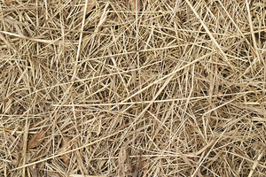 Grass And Wheat 31 Texture