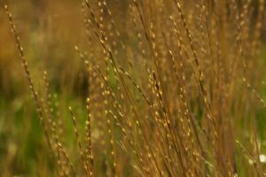 Grass Close-up Background