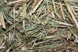 Grass Hay Background