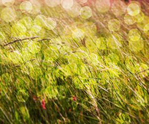 Grass Nature Abstract Background