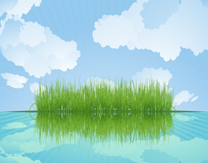 Grass Reflected In Water. Vector.