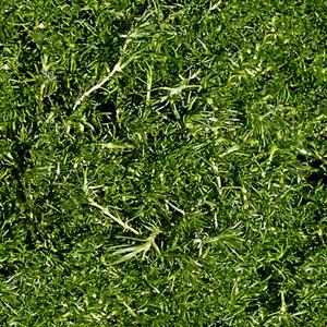 Grass Seamless Texture Tile