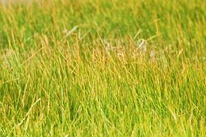Grass Texture 10