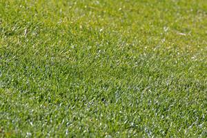 Grass Texture 11