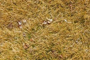 Grass Texture 18