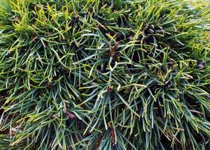 Grass Texture 20