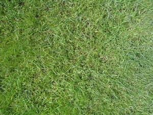 Grass_texture