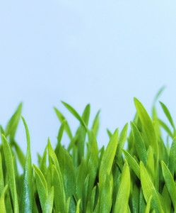 Grasses 170