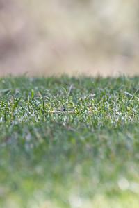 Grasses Close Up