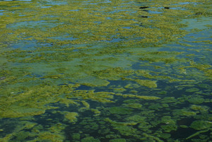 Green Algae Swamp