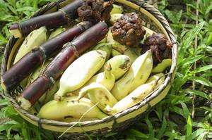 Green banana food for elephant