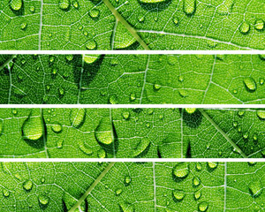 Green Banners Of Natural Water Drops