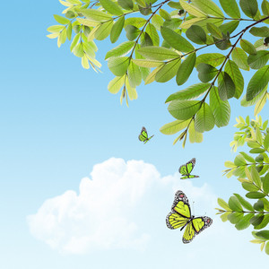 Green Butterflies Flying Near Tree Branch