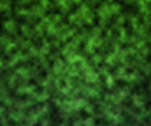 Green Digital Studio Backdrop