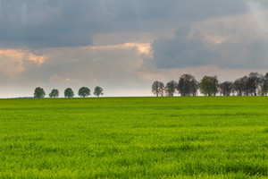Green field landscape with cloudy sky and distant trees.
