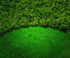 Green Golf Background Grass Texture