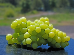 Green Grapes In Sun