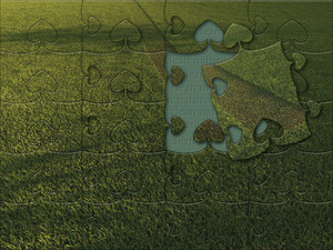 Green Grass Puzzle