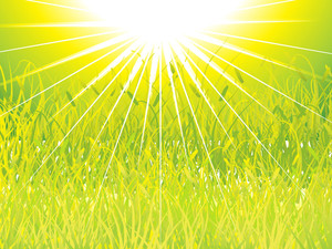 Green Grass Sunset Background
