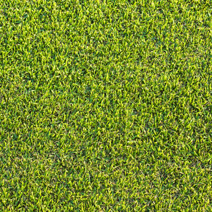 Green grass texture and backgrounds