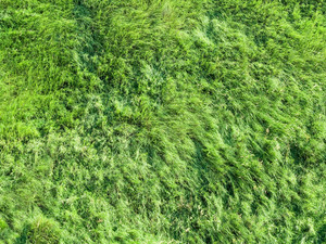 Green Grass Texture. Photo From Helicopter