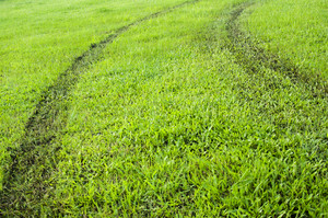 green grass way texture