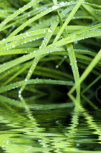 Green Lake And Grass With Dew