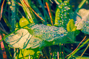 Green leaves cowered with water drops