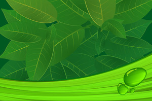 Green Leaves Vector Background With Drops Of Water