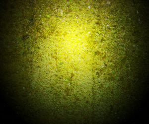 Green Moss On Wall Background