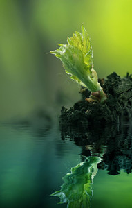 Green Plant Reflected In Water