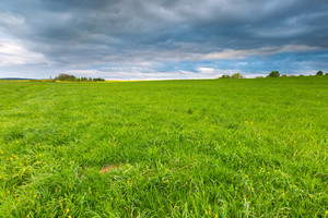 Green springtime meadow landscape with cloudy storm sky. Beautiful grassland landscape under dark sky