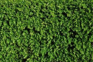 Green Turf Background