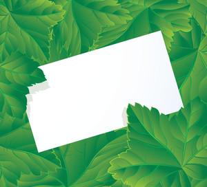 Green Vector Card.