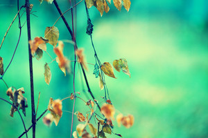 Green vintage natural autumn background. Selective focus