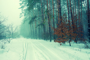 Green vintage snowy road in the misty forest