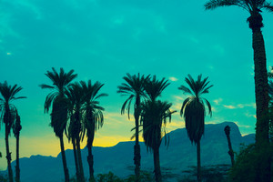 Green vintage sunset in desert. Palm trees against mountain