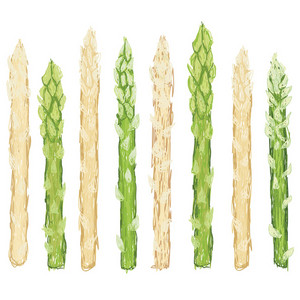 Green White Asparagus Isolated
