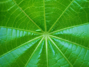 Green_leaf_close_up_texture