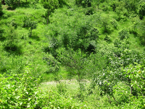 Green_trees_forest_texture